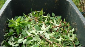 compost tumbers
