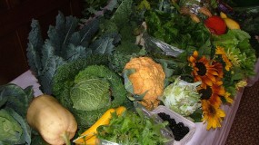 Fresh Organic garden
